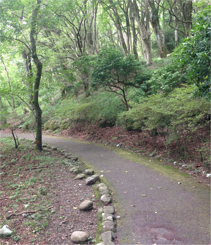 いざ、参らん!箱根のパワースポット。縁結びの神&富士山の美味しい湧き水もタダで❤️_7