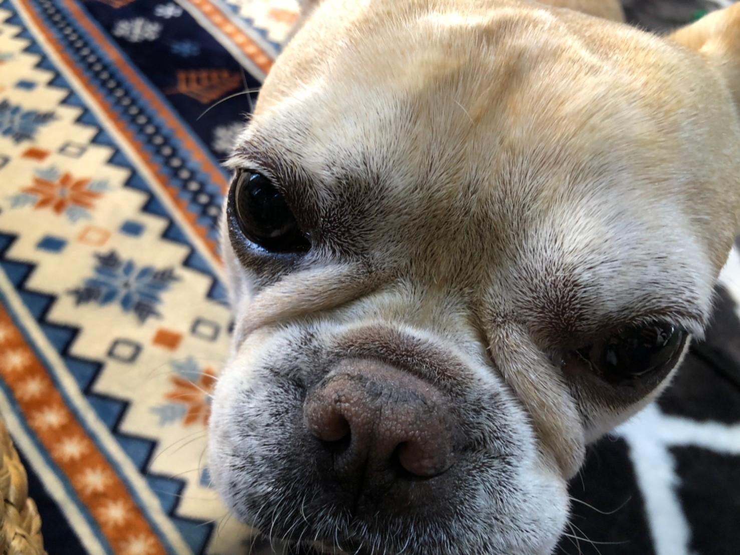 飼い主に甘える犬・まつこ