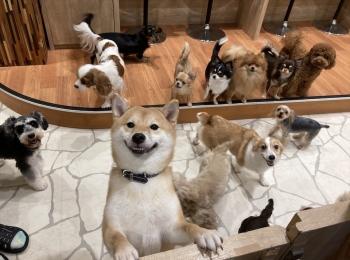 【わんこ好きさん必見!】puppy cafe RIO行ってきました♡癒されまくりスポット!