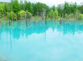 『北海道の名所 / 美瑛・青い池』