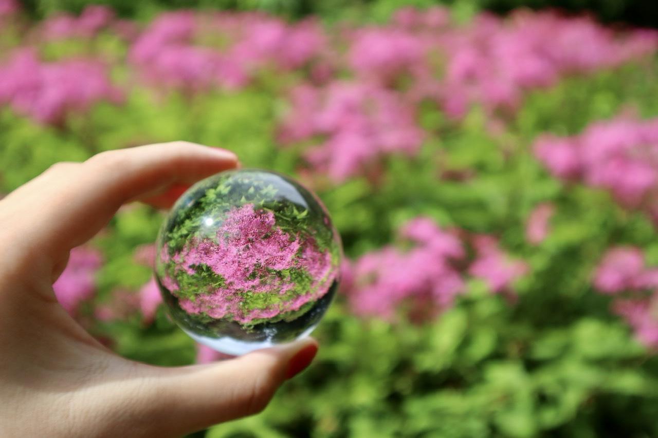 ピンク色の花がガラス玉にうつった写真