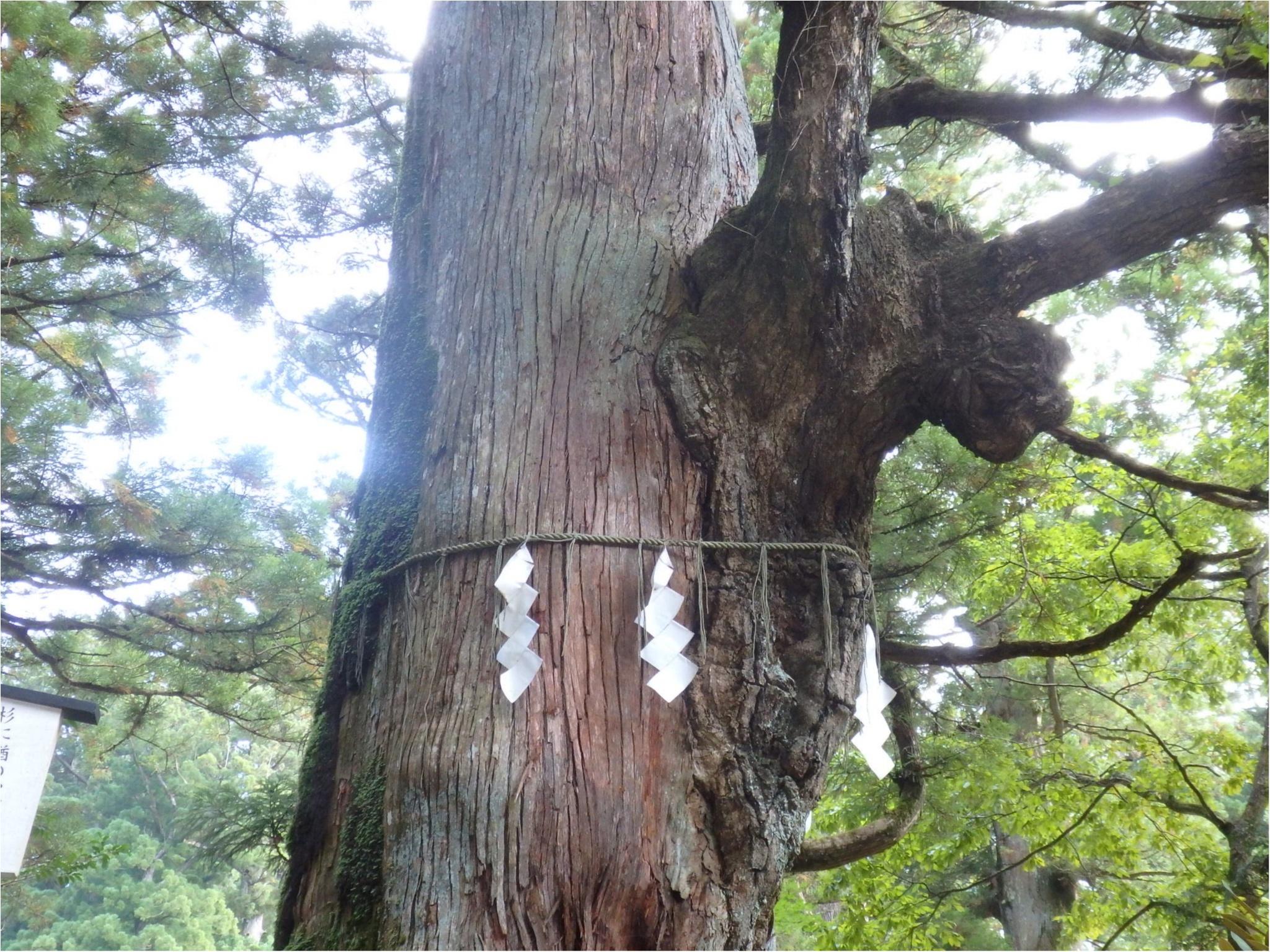 【知らなかった!】日本一楽しめる神社へ潜入してみた_16