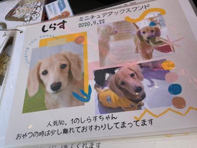 犬の種類が書かれたポップ