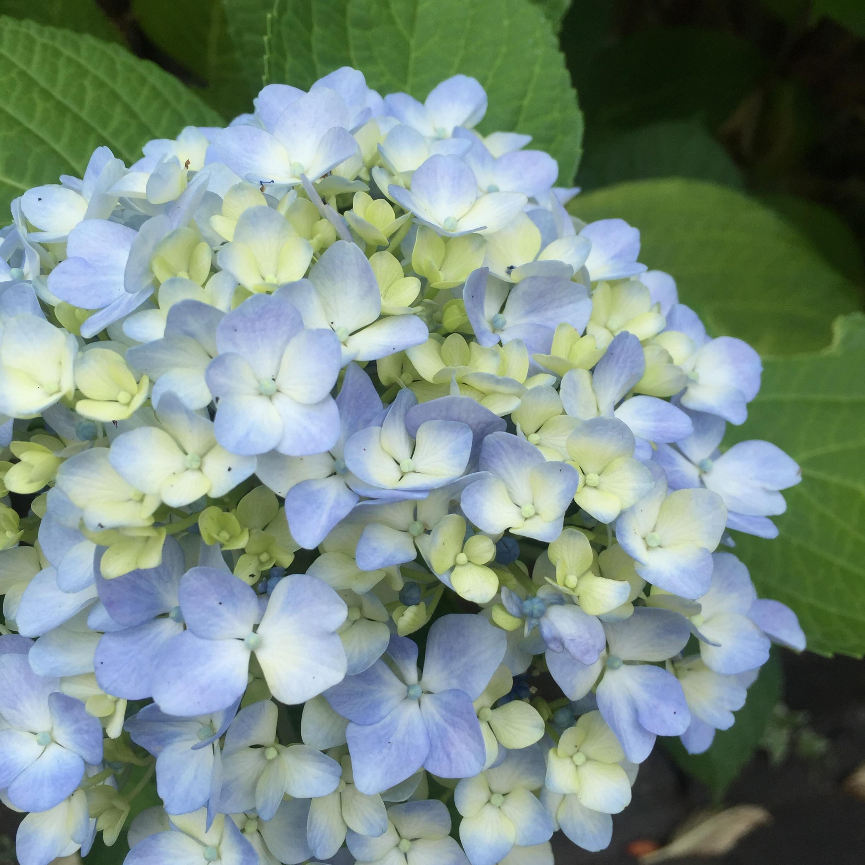 【京都】紫陽花を探しに東福寺へ、、思わぬ絶景に感動♡_4