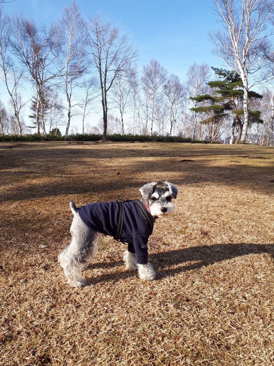 【今日のわんこ】走り回るの楽しい! サクラちゃんが『菅平高原』に!!_1