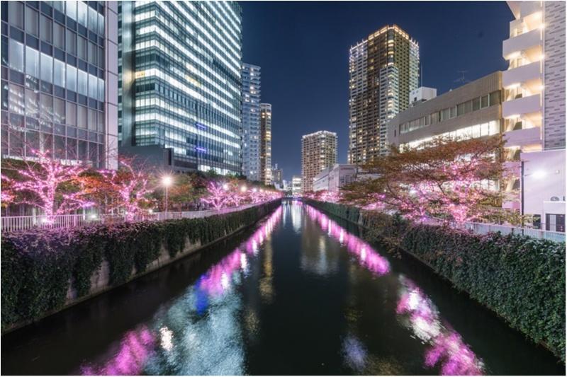 東京都内のおすすめイルミネーション、表参道、恵比寿、お台場etc.11選☆彡_9_3