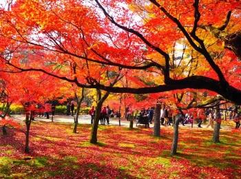 鎌倉&京都のおすすめ女子旅♪ ピクサー新幹線に乗ってみた♡【今週のMOREインフルエンサーズライフスタイル人気ランキング】
