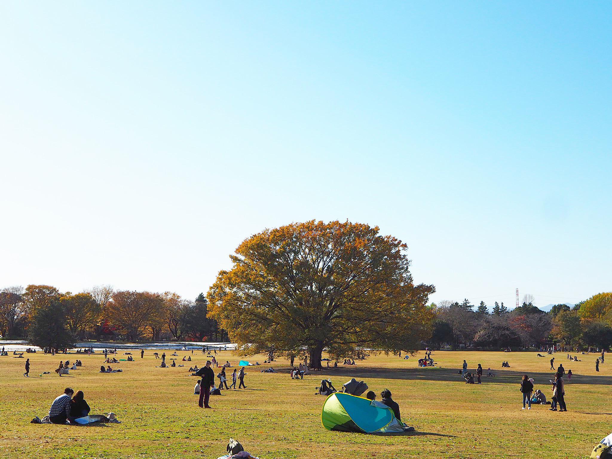 【秋の昭和記念公園】銀杏並木と紅葉サイクリング♩_7