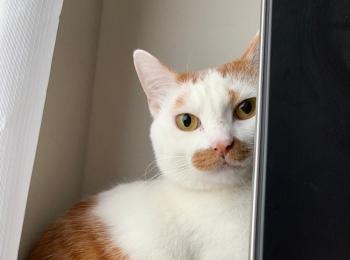 【今日のにゃんこ】ラビくんがテレビの後ろに隠れるワケは?