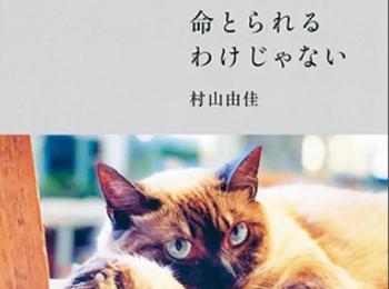 猫を愛するすべての人に贈るエッセイ『命とられるわけじゃない』【おすすめ本】