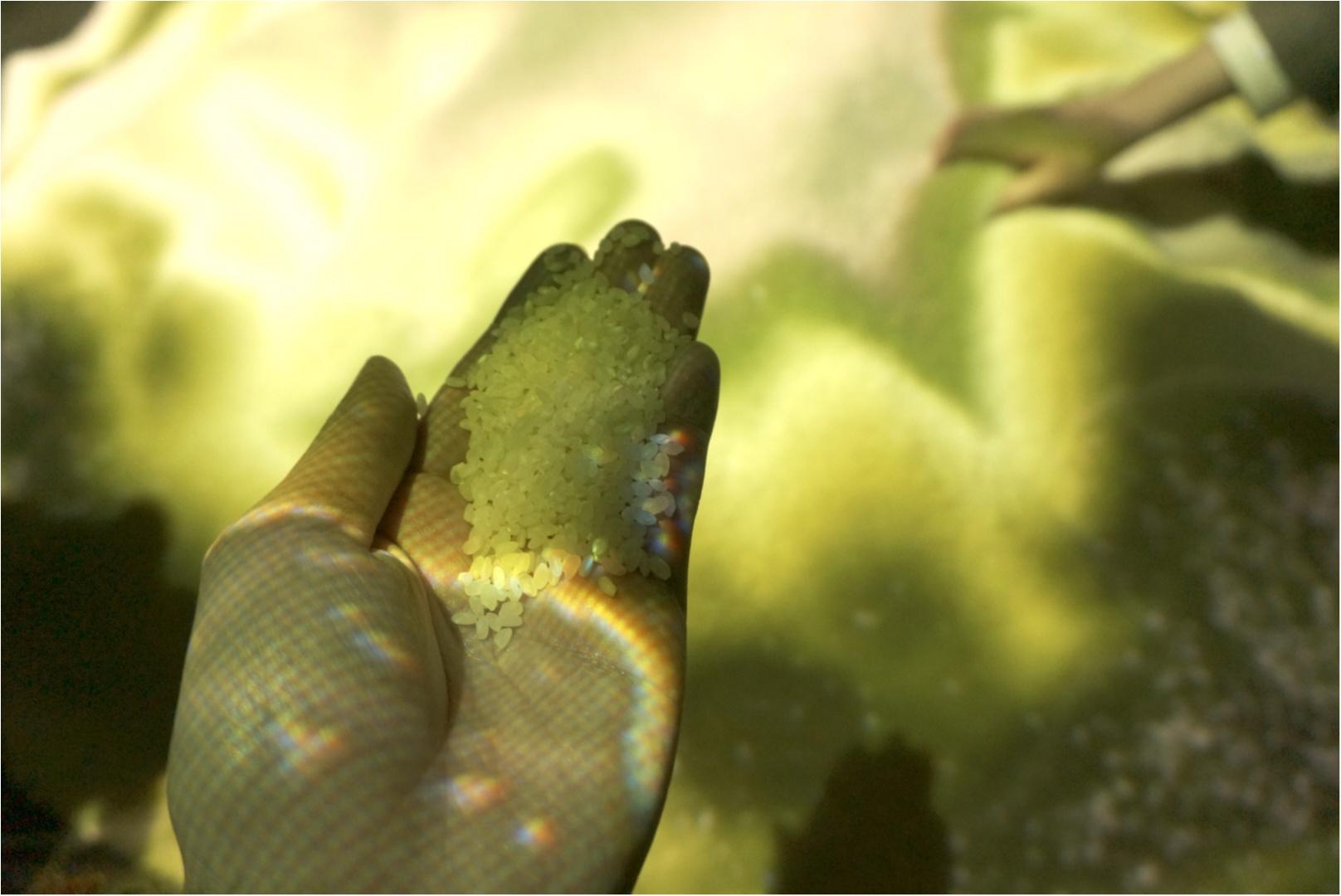 新感覚の見て食べる体験型デジタルアートのクオリティーがすごい( ´艸`)‼︎_11