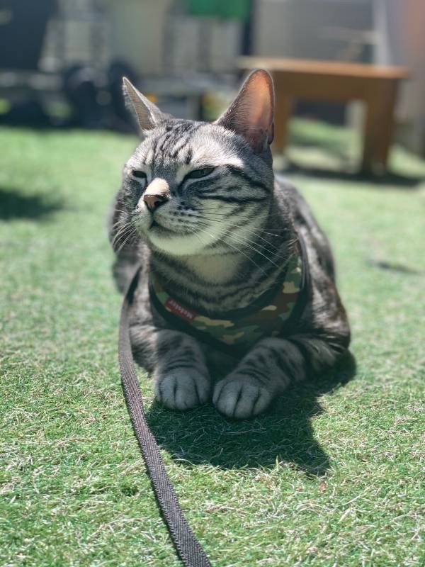 家の庭で日光浴を楽しむ猫・ソラくん