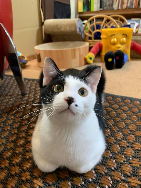 カメラ目線の猫・ルウくんとラビくん
