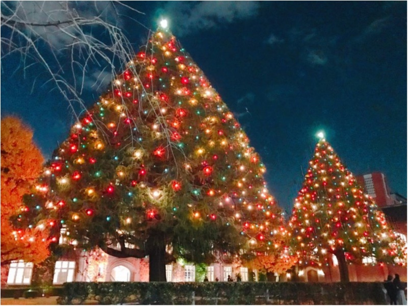《あなたはどれが好み?》クリスマスツリー特集♡_3