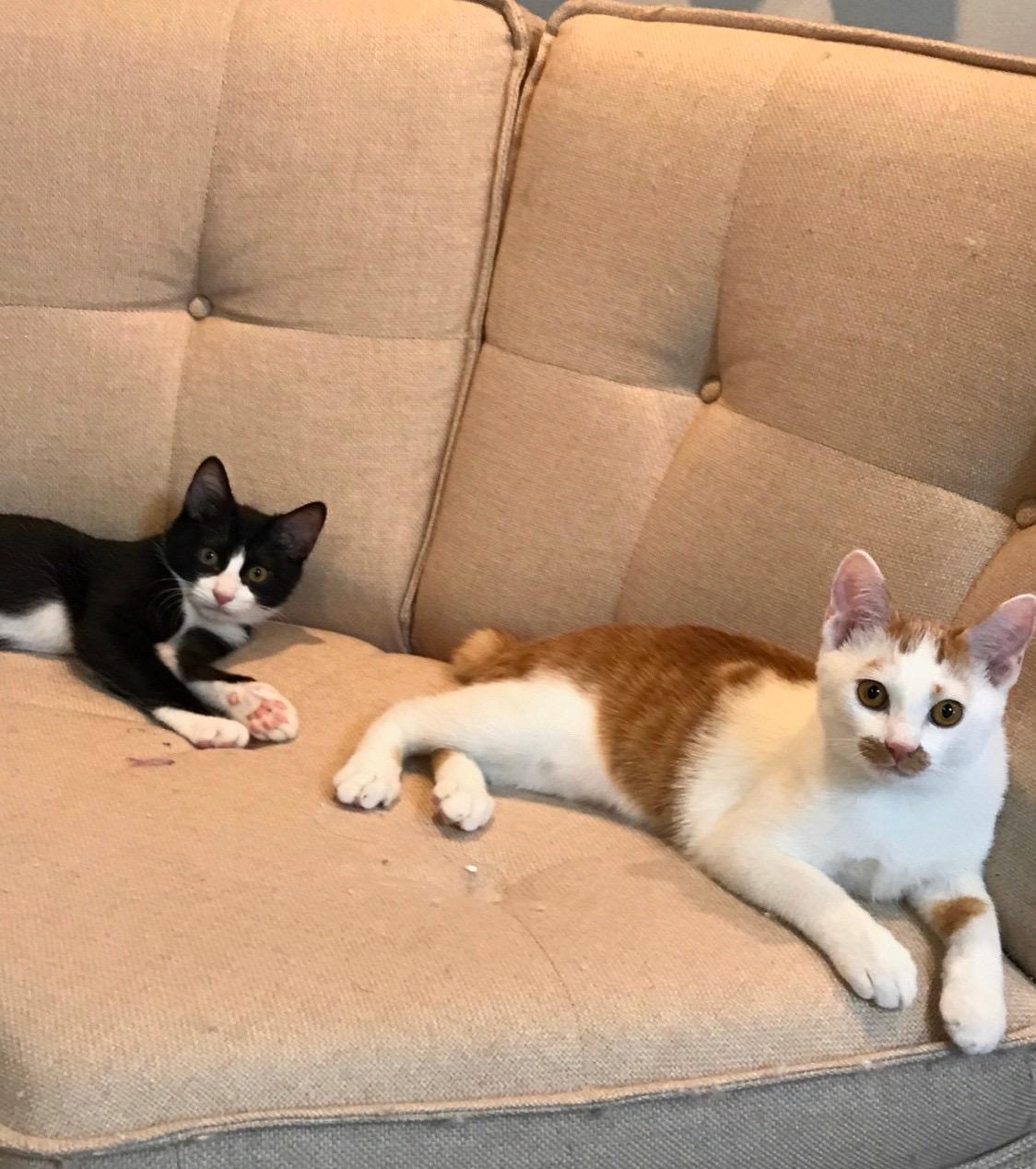 【今日のにゃんこ】ラビくんとルウくんの子猫時代の写真とエピソード_1
