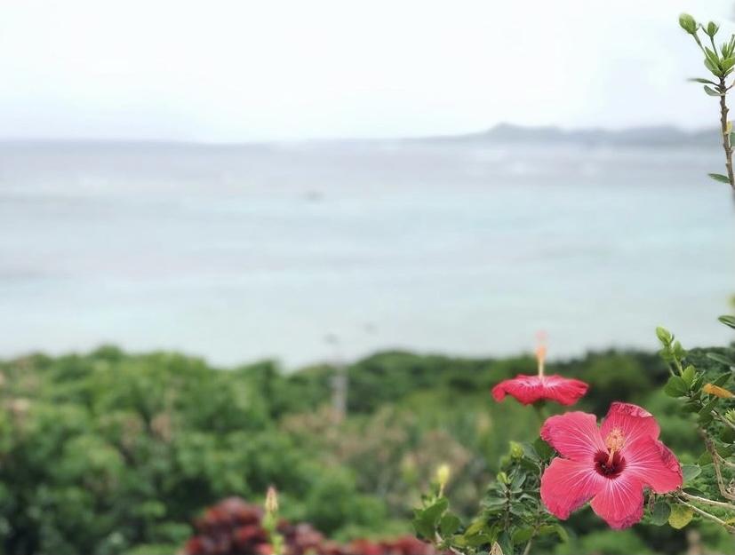 沖縄 ハイビスカス 玉取崎展望台 海沿い 海岸 展望台
