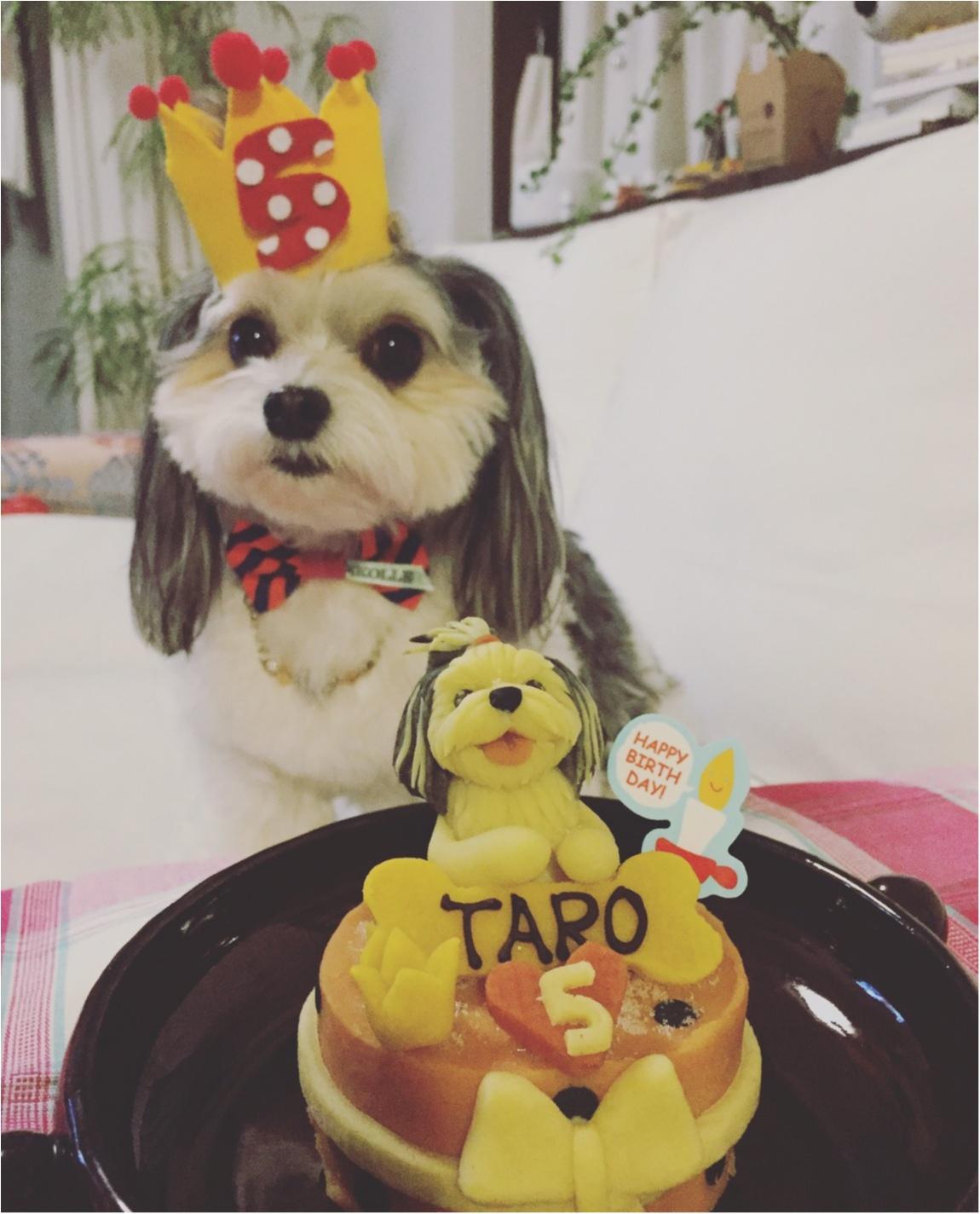 【今日のわんこ】おめでとう♡ 5歳になった太郎くんのパーティーをのぞき見♪_1