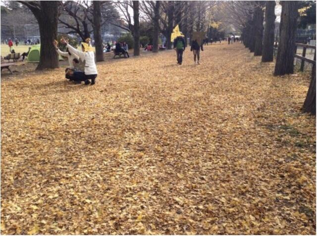【私がおすすめする紅葉スポット】一度は歩きたい!《イチョウ並木の黄色いじゅうたん》がココにあります!!_6