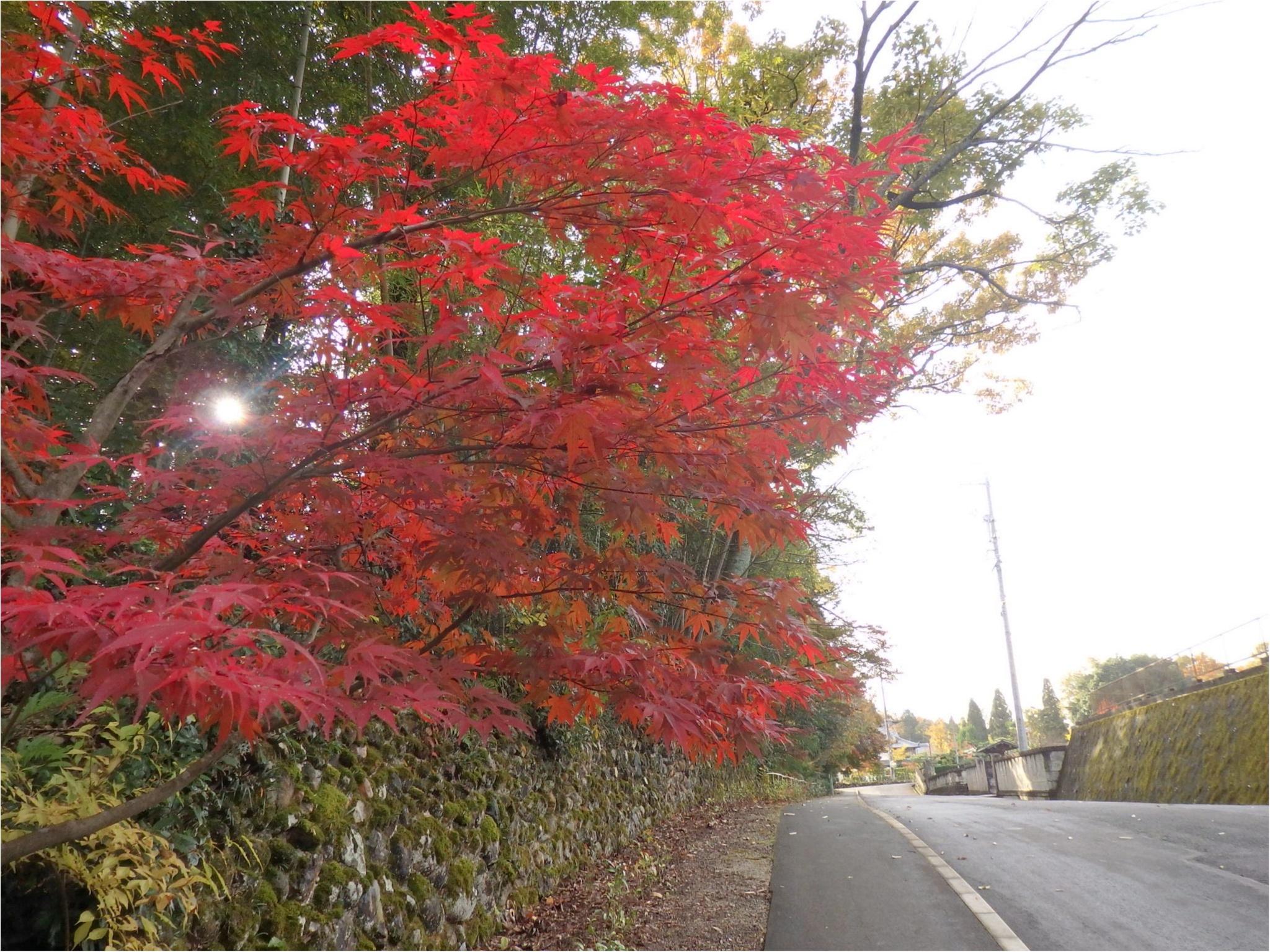 【イケメン地蔵】話題の岐阜で秋を満喫♪_3