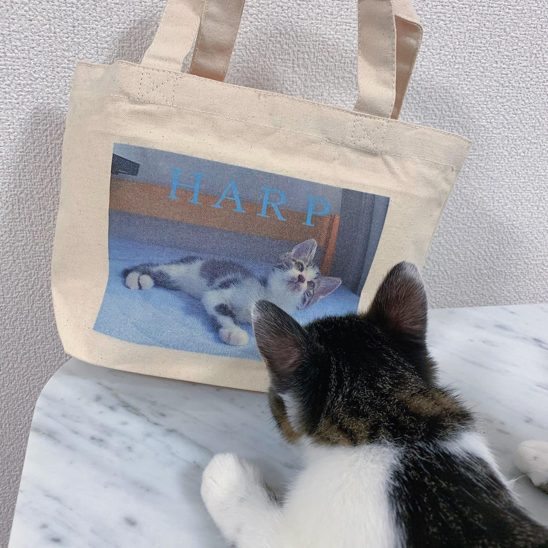 【エコバッグ】お気に入りの写真で!自分だけのオリジナルトートバッグ♡_3