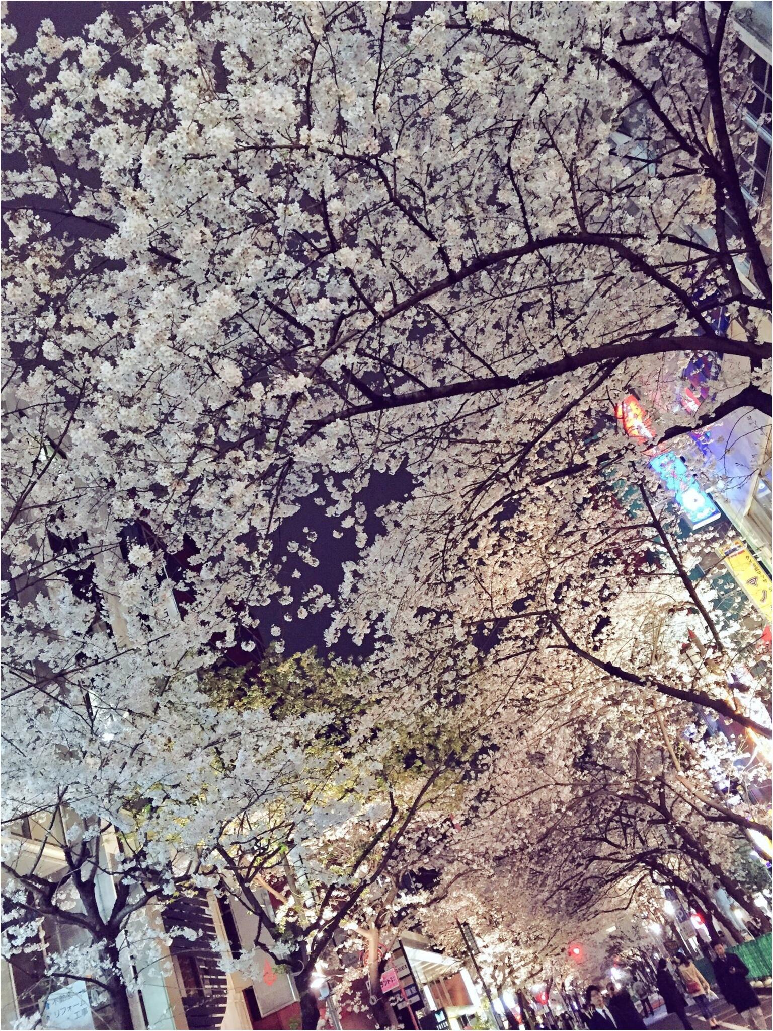 ♡りぃおすすめ!都内の夜桜スポットBEST3♡_3