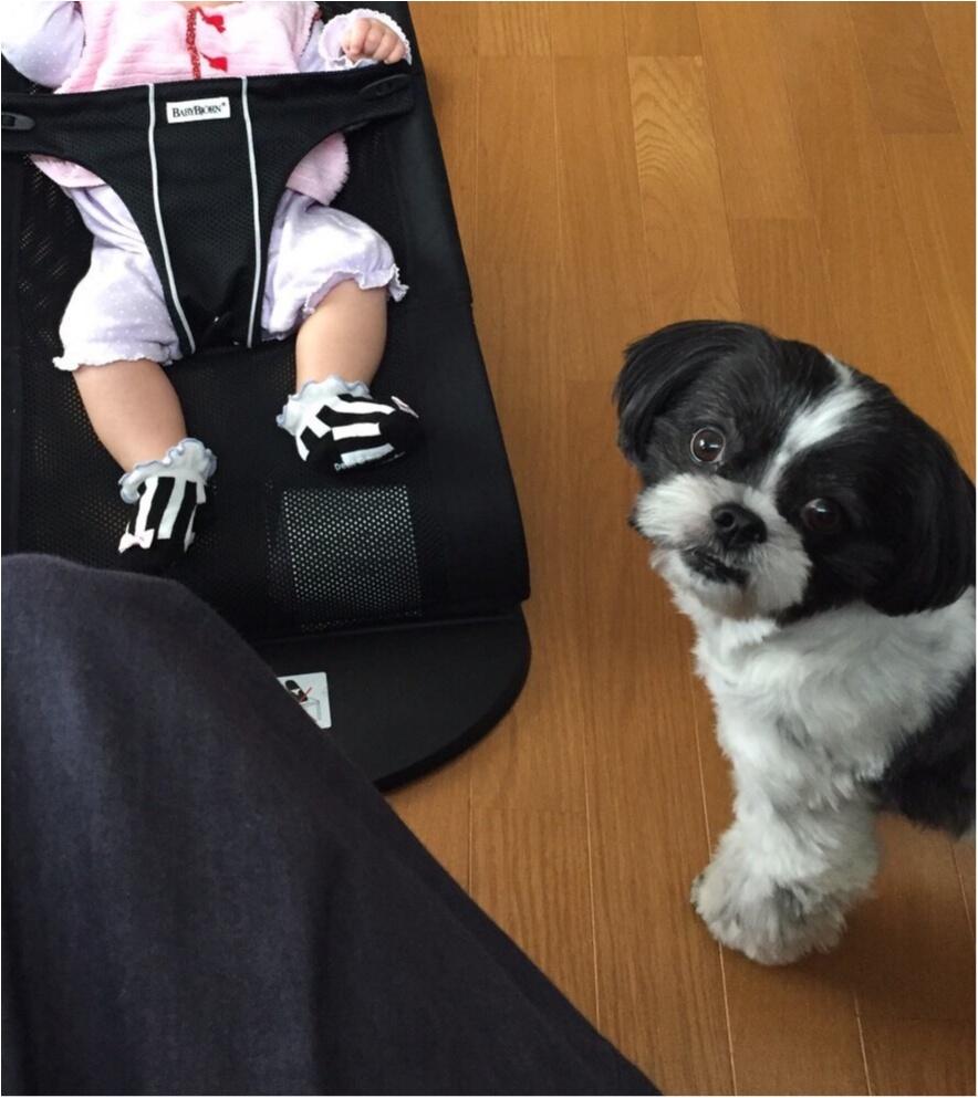 【今日のわんこ】かわいすぎる~♡ アイビーくんは赤ちゃんに夢中_1