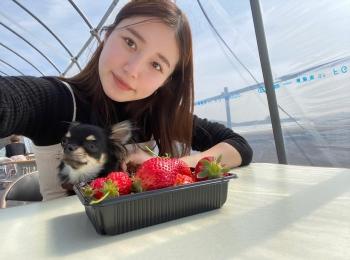 【おすすめいちごスイーツ】関東圏内のいちご狩りで春の贅沢食べ放題