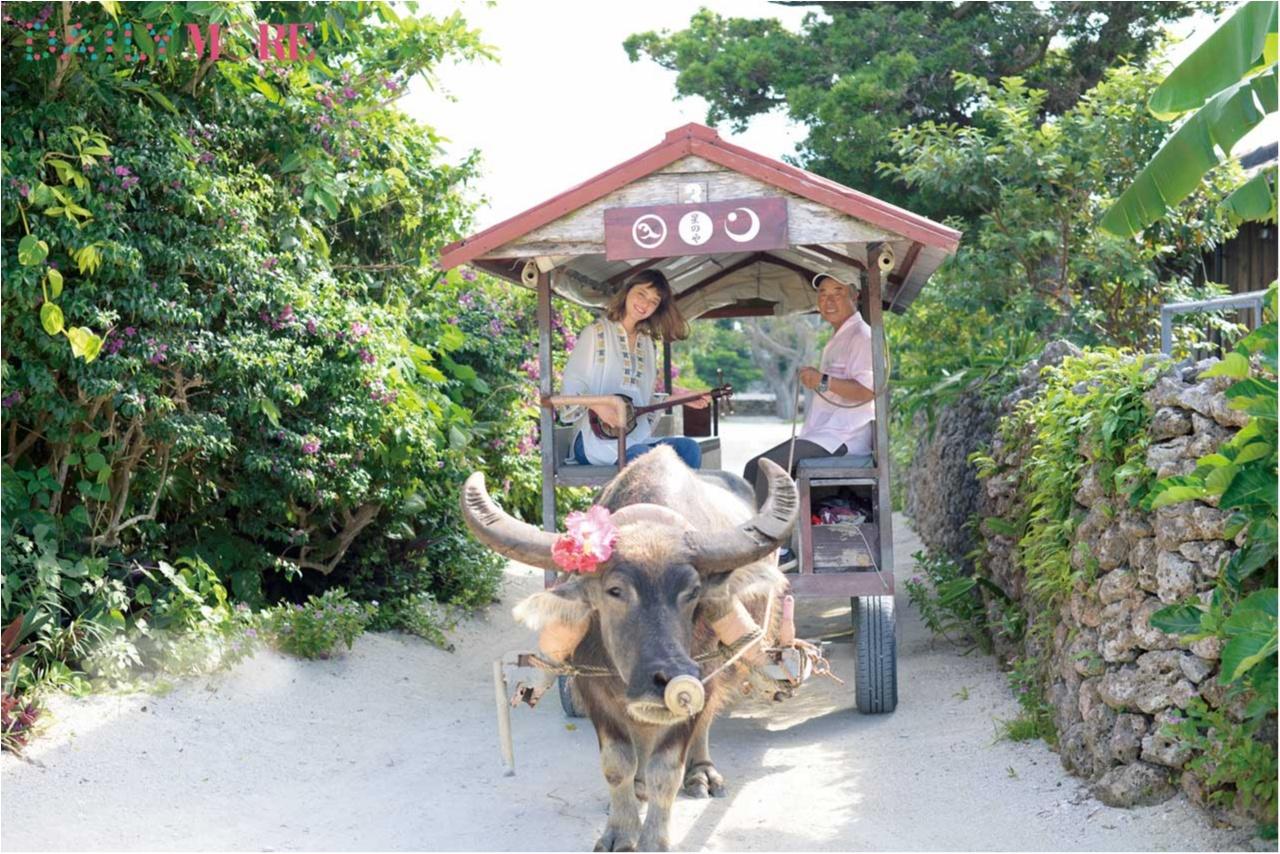 感動の連続! セシルも恋した沖縄離島へ、JALで旅する賢い3つの方法!!_5